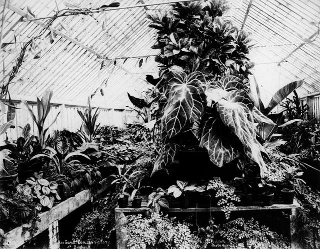 Fern-filled Conservatory at Bowen Park, Brisbane, ca. 1890 by State Library of Queensland, Australia, via Flickr