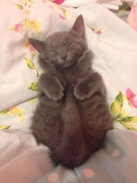 aw, how is this comfortable cat?