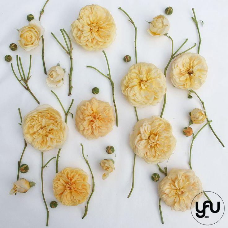 TRANDAFIRI DE GRADINA _ geometria trandafirilor _ yau concept_yau flori_elena toader (4)