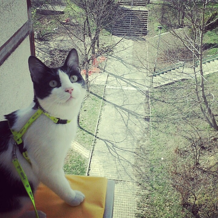 Hangin' with the birds #cat