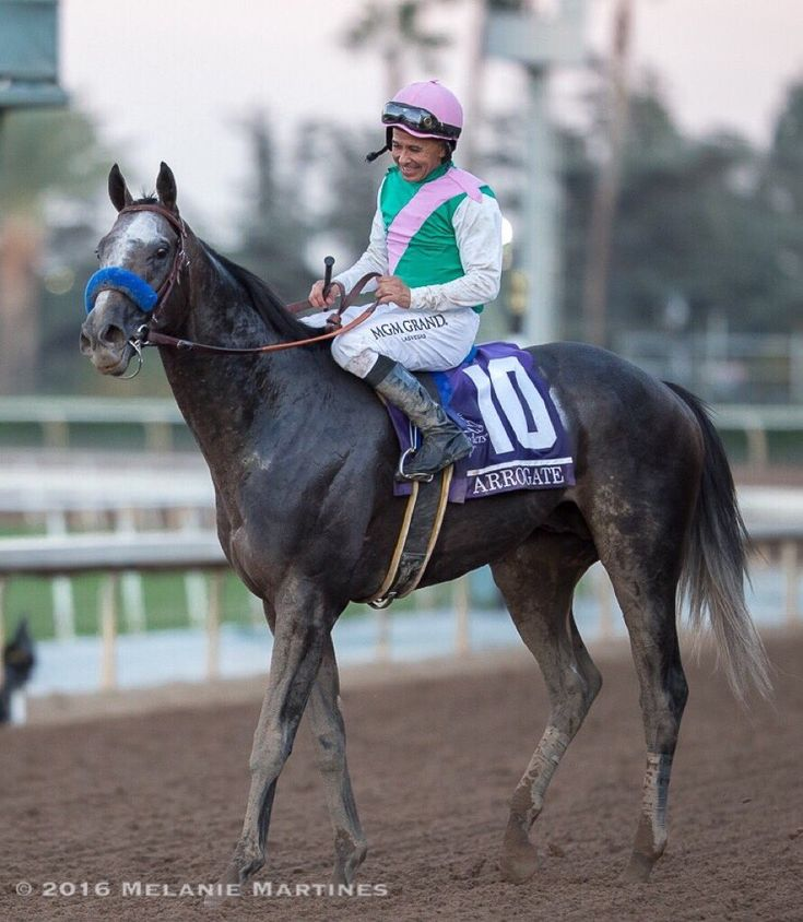 Arrogate & Mike Smith after just winning the Breeders Cup 2016