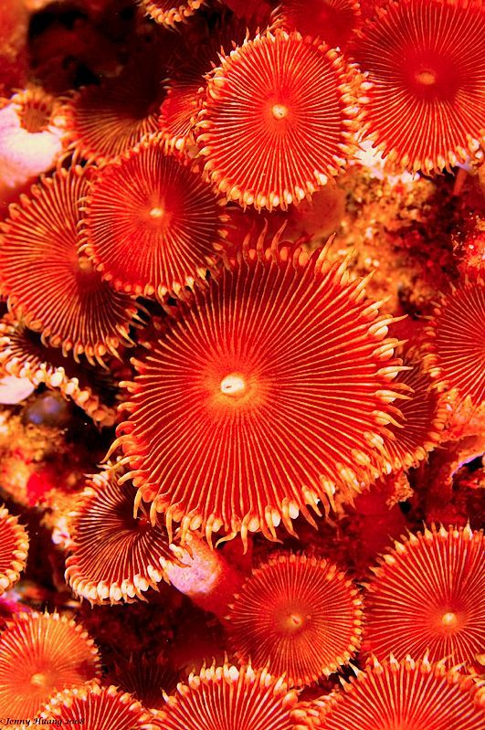 91 Best Coral To Work Off Of Images On Pinterest