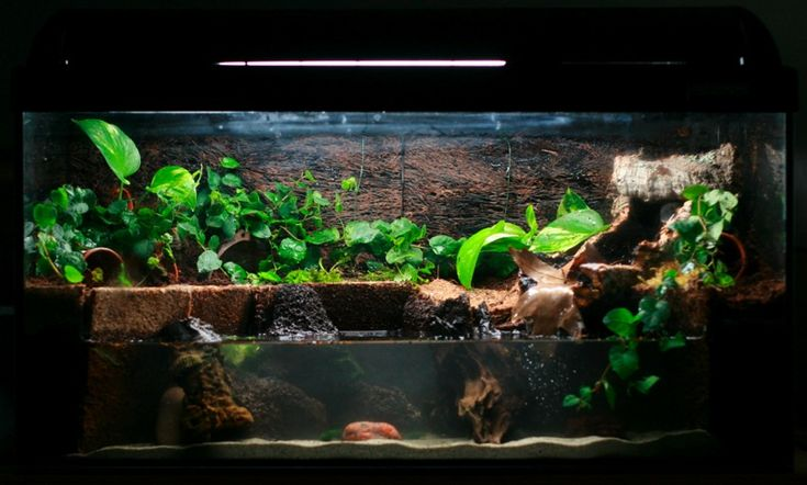 I love this style of tabk animal tanks pinterest for Fish tank frogs