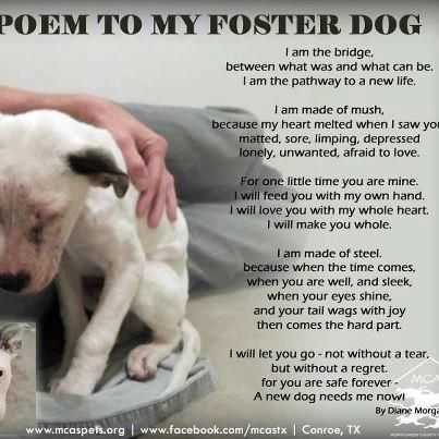 Poem for your foster ❤❤