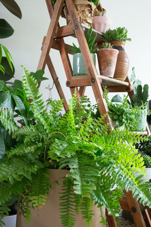 Best 25 indoor plant decor ideas on pinterest plant for Decoration urban jungle