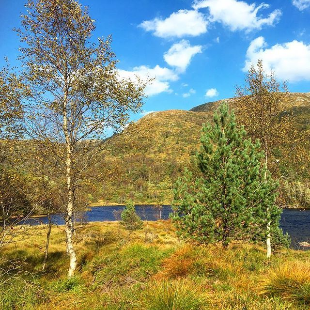 Warm #autumn colors in the mountains of #norway and the October sun still feels pretty warm! #travel #hiking