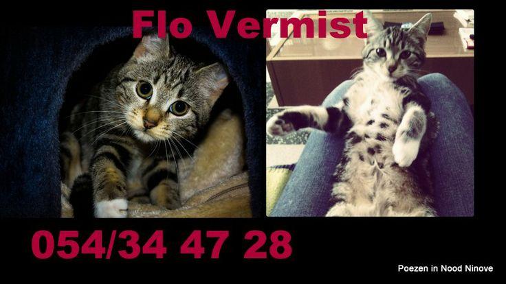 Flo vermist in Pamelstraat Ninove