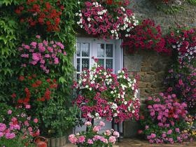 French country home: Gardens Ideas, Flowers Gardens, Summer Gardens, Cottages Gardens, French Farmhouse, French Country Home, Beautiful Flowers, Beautiful Gardens, Window Boxes