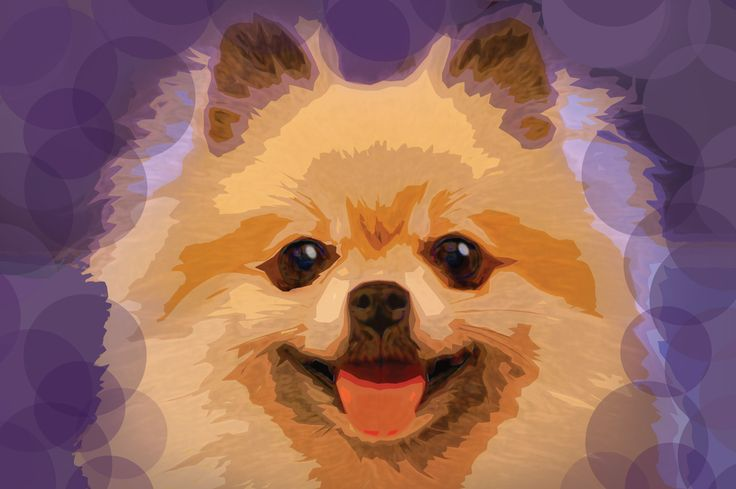 Bubbly Peke with Bubble Background