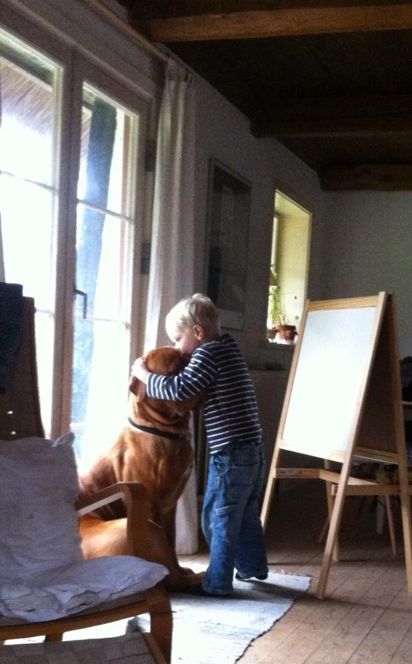 Dogue de bordeaux dog Arthur getting kisses and hugs from best friend <3