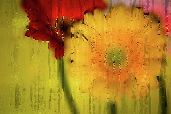 An abstract shot depicting flowers through wet glass.