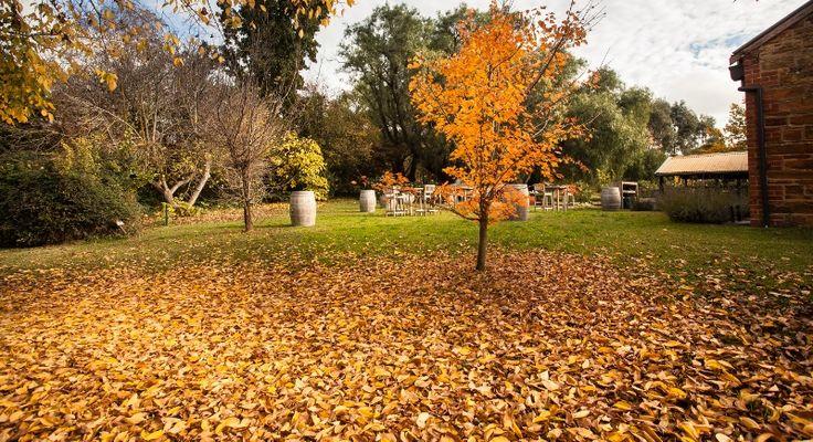Autumn Colour @ Chateau Dore Winery