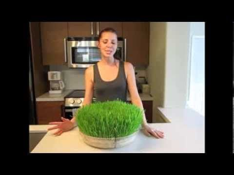 Updated: How to Grow Wheatgrass - YouTube