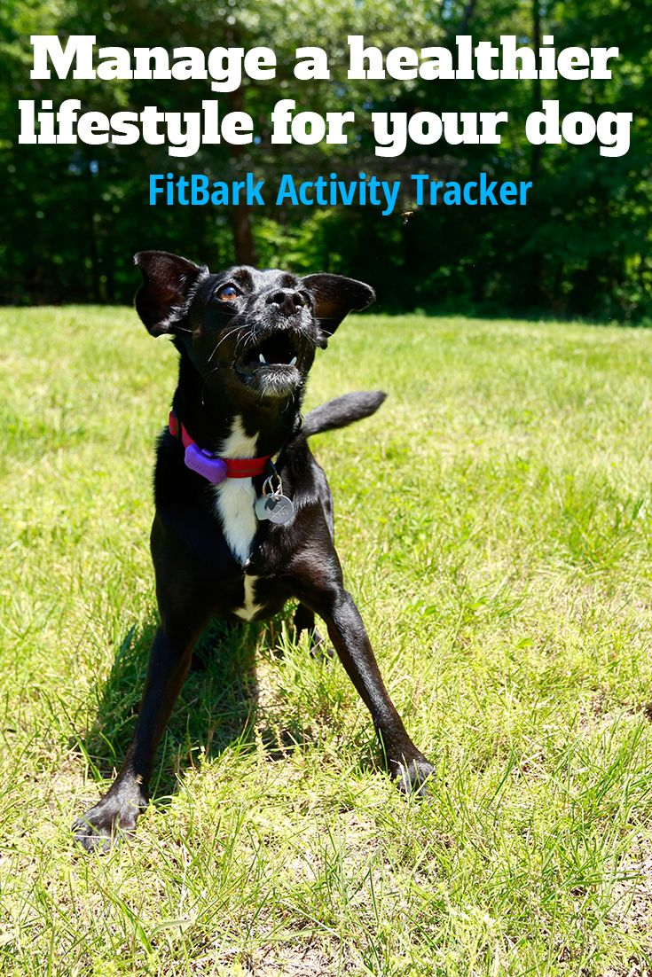 Build A Healthy Lifestyle For You And Your Pet The Fitbark 2 Pet Activity Monitor Is A Flexible Powerful Tool That Help With Images Dog Activities Dogs Activity Monitor