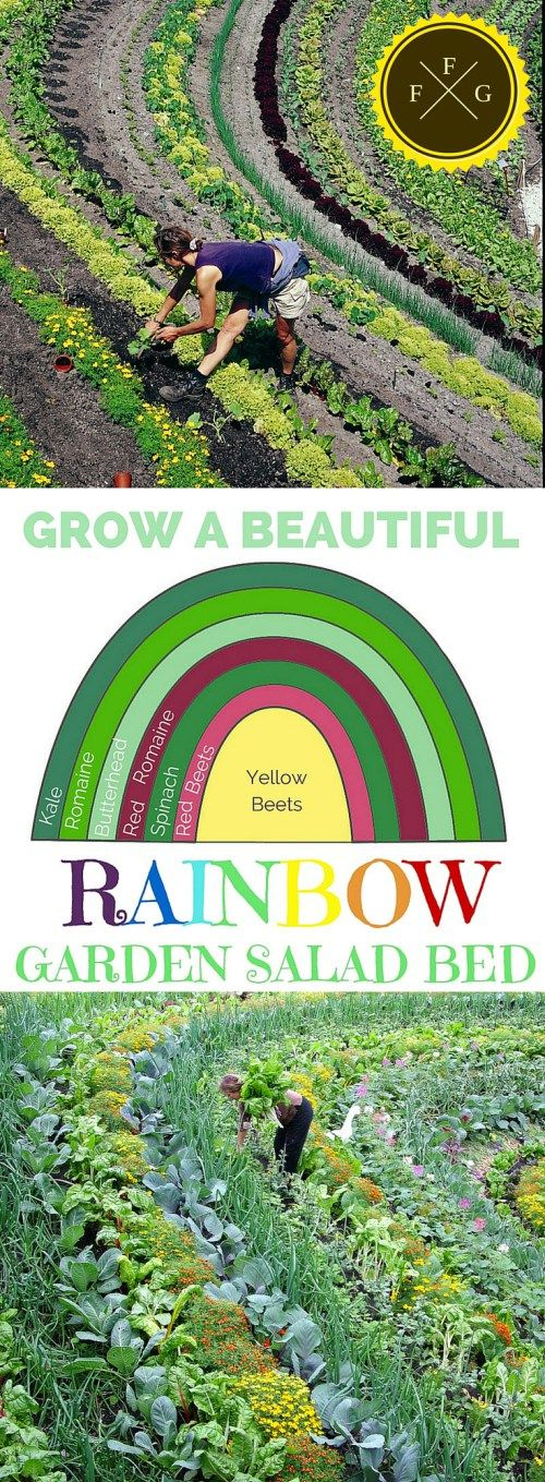 Edible Landscaping! Grow a beautiful garden salad rainbow! Healthy and pretty.: