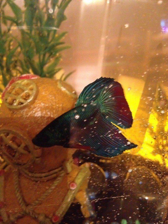 17 Best Images About Quiet Pets On Pinterest Aquarium