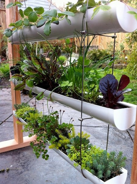 17 Best Images About Diy Gutter Gardens On Pinterest