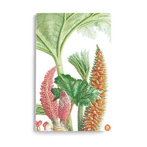 """Libretas para empezar bien el año, con ilustraciones del libro """"Plantas de los Bosques de Chile"""" del @rbgedinburgh #floranativa #plantaschilenas #libretas #disenochileno #hechoenchile #diseñonacional #ilustracionbotanica"""