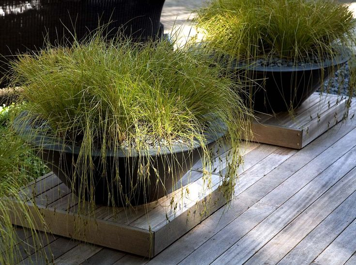 Going to plant grasses in containers this year in Las Vegas and see how they survive the winter.