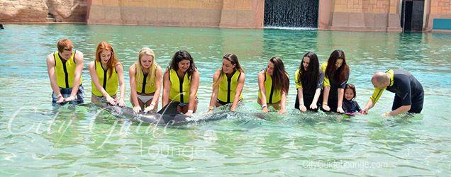 Schwimmen und tauchen mit Delfinen, Dolphin Bay Atlantis, Palmeninsel Dubai - Dinge, die man in Dubai tun sollte
