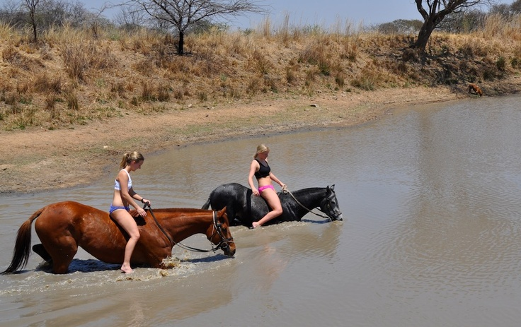 Join a horse safari and get the opportunity to swim with the horses.