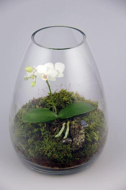 Orchid Terrarium | Flickr - Photo Sharing!