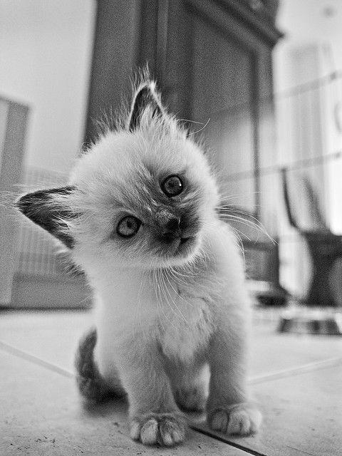 OMG! The cutest little kitty!!!