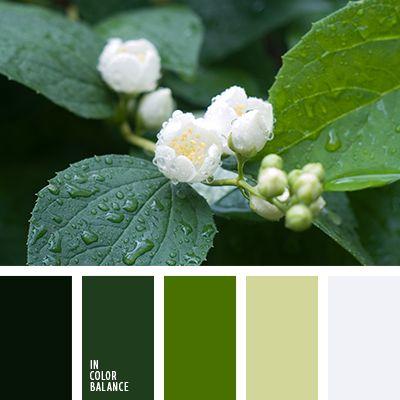 монохромная зеленая цветовая палитра, монохромная цветовая палитра, оттенки зеленого, подбор цвета, сочетание цветов для декора интерьера, цвет базилика, цвет зеленого чая, цвет зеленого яблока, цветовое решение для дизайна помещений, яркий зеленый.  19