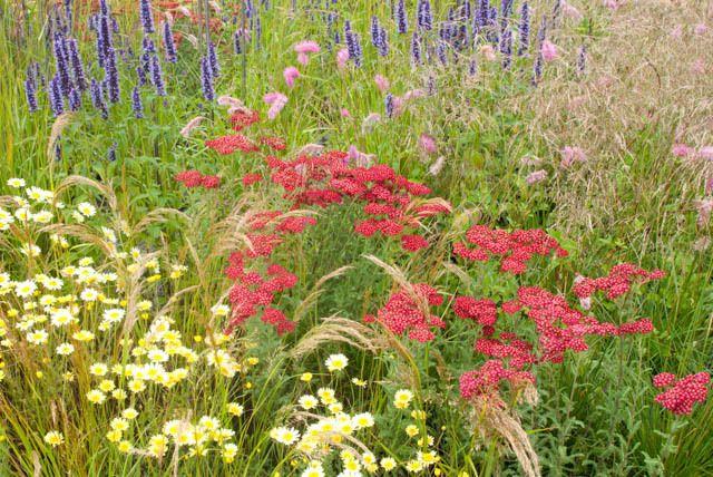 122 best images about achillea on pinterest gardens sun for Perennial plant combination ideas