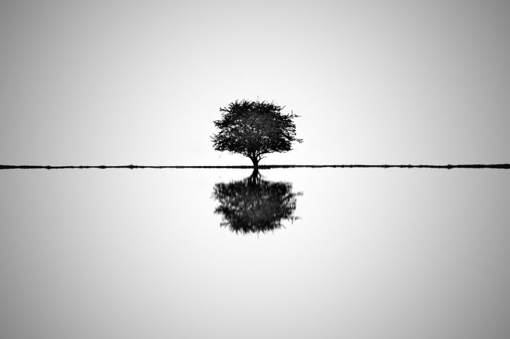 Strom naděje (II.)