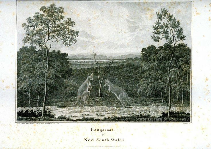 'Kangaroos of New South Wales, View from Seven-Mile Hill near Newcastle. N.S.W.'  This engraving was made in New South Wales by an unknown artist  ca. 1817: the copper plate was taken back to England by Captain James Wallis and published, with eleven other engravings, in his Historical Account of the colony of New South Wales, 1821. From the collections of the Mitchell Library, State Library of New South Wales: http://www.acmssearch.sl.nsw.gov.au/search/itemDetailPaged.cgi?itemID=404936