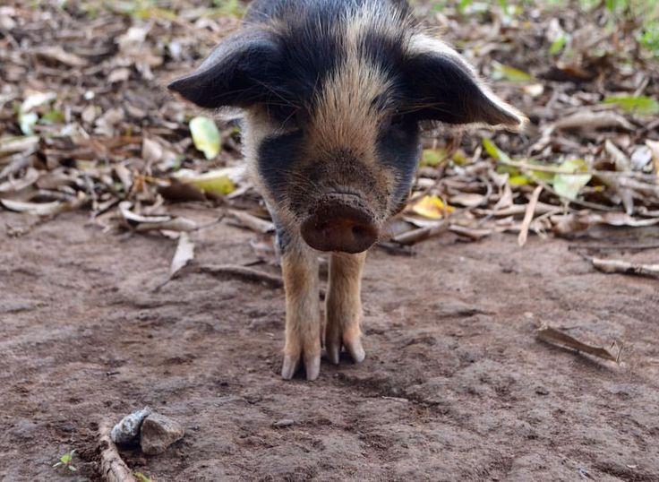 Cute pig to start your week 🐷 #projectoutward #womensempowerment #pig #cute