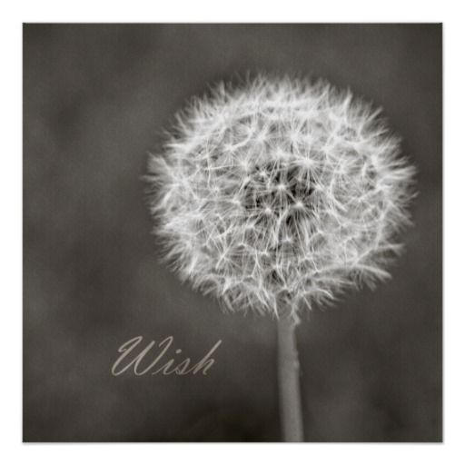 Inspired Wish Dandelion by Joacreations on Zazzle @zazzle #heart #zazzle #fun #buy #sale #shop #shopping #blog #blogging #look #text #font #sweet #awesome #fun #poster #wall #decor #office #home #homedecor #student #apartment #accessory #accessories #style #poster #nature #dandelion #flower #wish