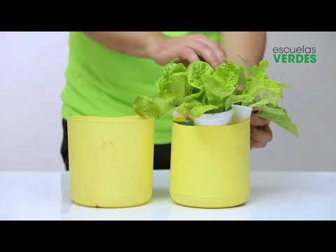 Paso a paso: Hidroponia Casera - YouTube
