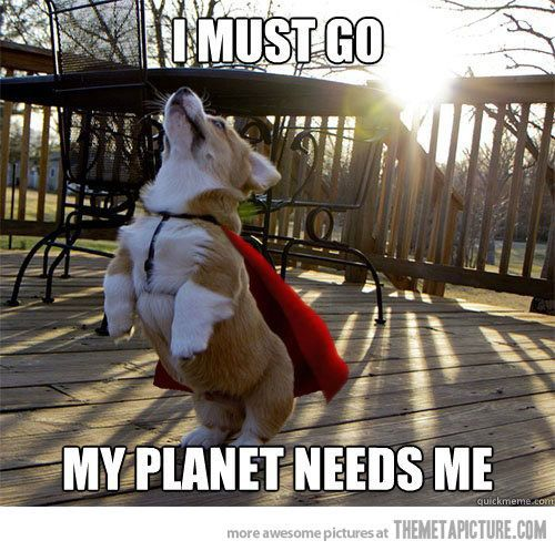 Never fear, Super Corgi is here! #dogs #adorable #cute #doglovers