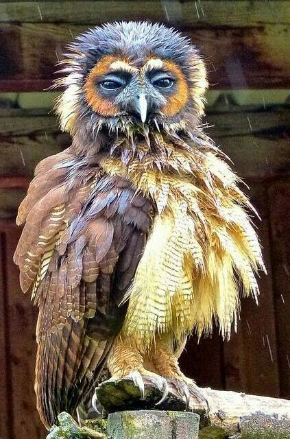 119 best Wildlife Biologist images on Pinterest Beautiful birds - sample wildlife biologist resume