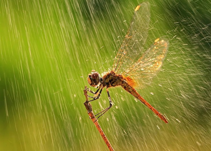 One Line Macro Art : Best images about animals in the rain on pinterest