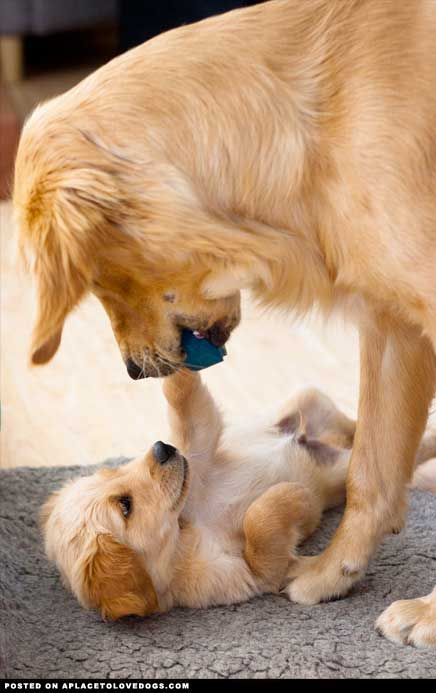 Playing With Mom From Aplacetolovedogs Com Dog Dogs