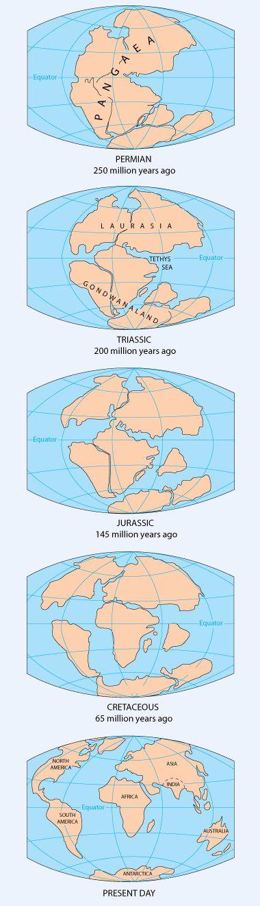 Watch interactive tectonic drift break up of Pangea - http://geology.com/pangea.htm