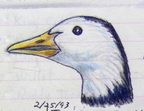 Snow Goose, Blue phase,  color pencil & ball ponit pen, 1993