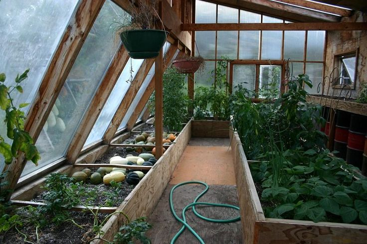 Attaching a green house to your house not only grows you food longer, but it can also help heat your house.