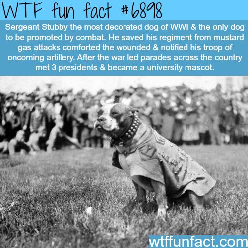 Sergeant Stubby - WTF fun fact
