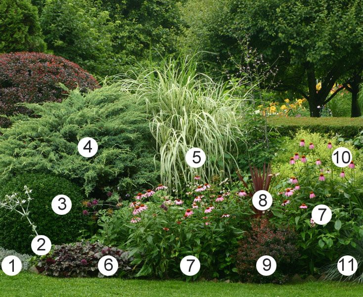 Building Better Borders - Fine Gardening Article. Like the Variegated miscanthus in this photo (#5)