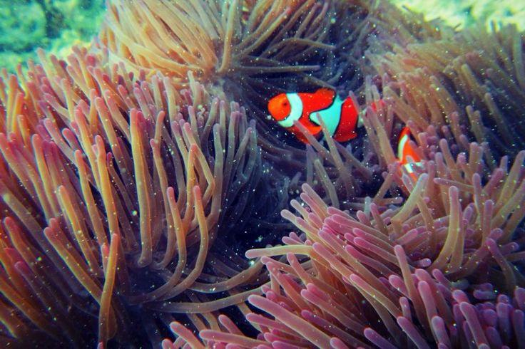 Peterpans Cairns Premier Reef Island Tours
