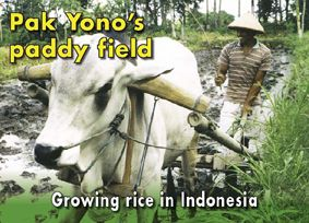 Pak Yono paddy field (scroll down page and click on image of book to open pdf) also teaching notes - http://www.curriculumsupport.education.nsw.gov.au/primary/hsie/resources/pakyono_teach.pdf