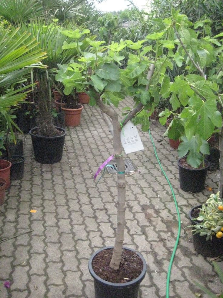 60 best Pflanzen images on Pinterest Plants, Backyard and - pflanzen topfen kubeln terrasse