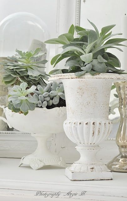ciao! newport beach: decorating with succulents - Traditional Style - Decorating With #Urns