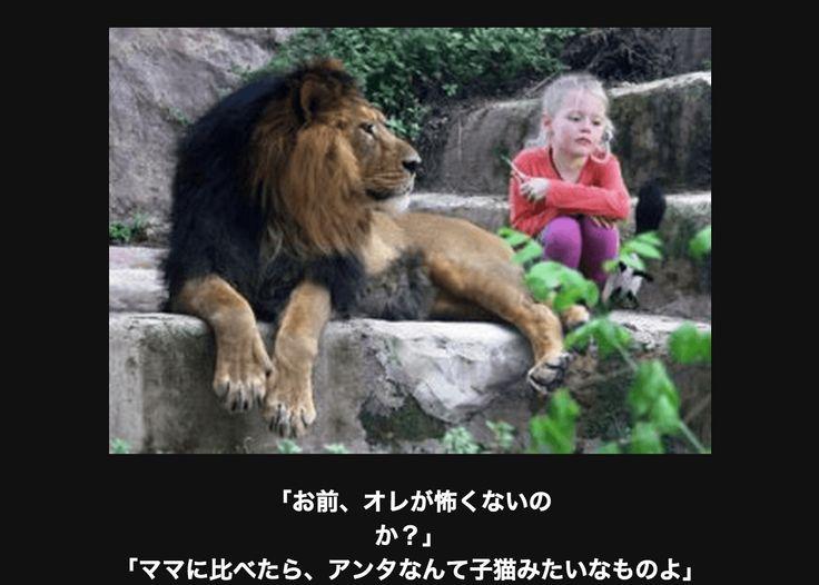【腹筋崩壊】笑いが止まらないアニマル画像大喜利18選