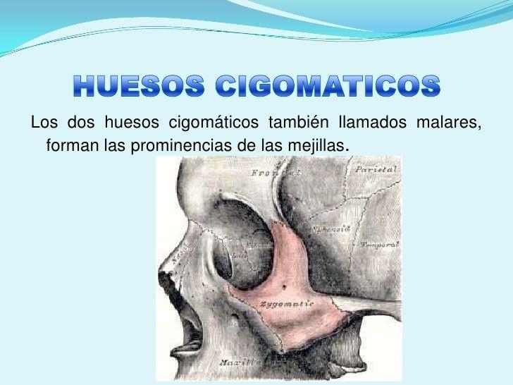 Best 44 Anatomía cuerpo humano images on Pinterest | Cuerpo humano ...