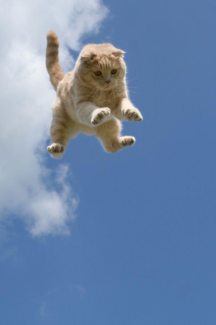 Коты летят картинка